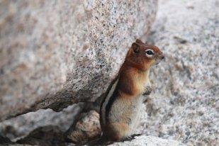 Mrs. Groundsquirrel.