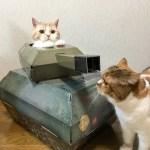 にゃるパンはいいぞ。猫用戦車を購入した