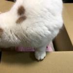 ネピア プレミアムソフト トイレットロール 日本の美 桜 12ロール ダブルをもらいました!