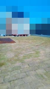東海村で220平米の芝張り