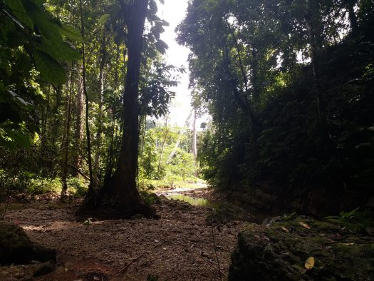 K in Motion Travel Blog. Spirits and Storms on the Solomon Islands. Trail to Tenaru Falls