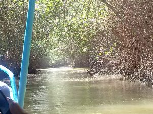 K In Motion Travel Blog. Northern Peruvian Frontier Town of Tumbes. Mangrove Tour in a Little Blue Boat