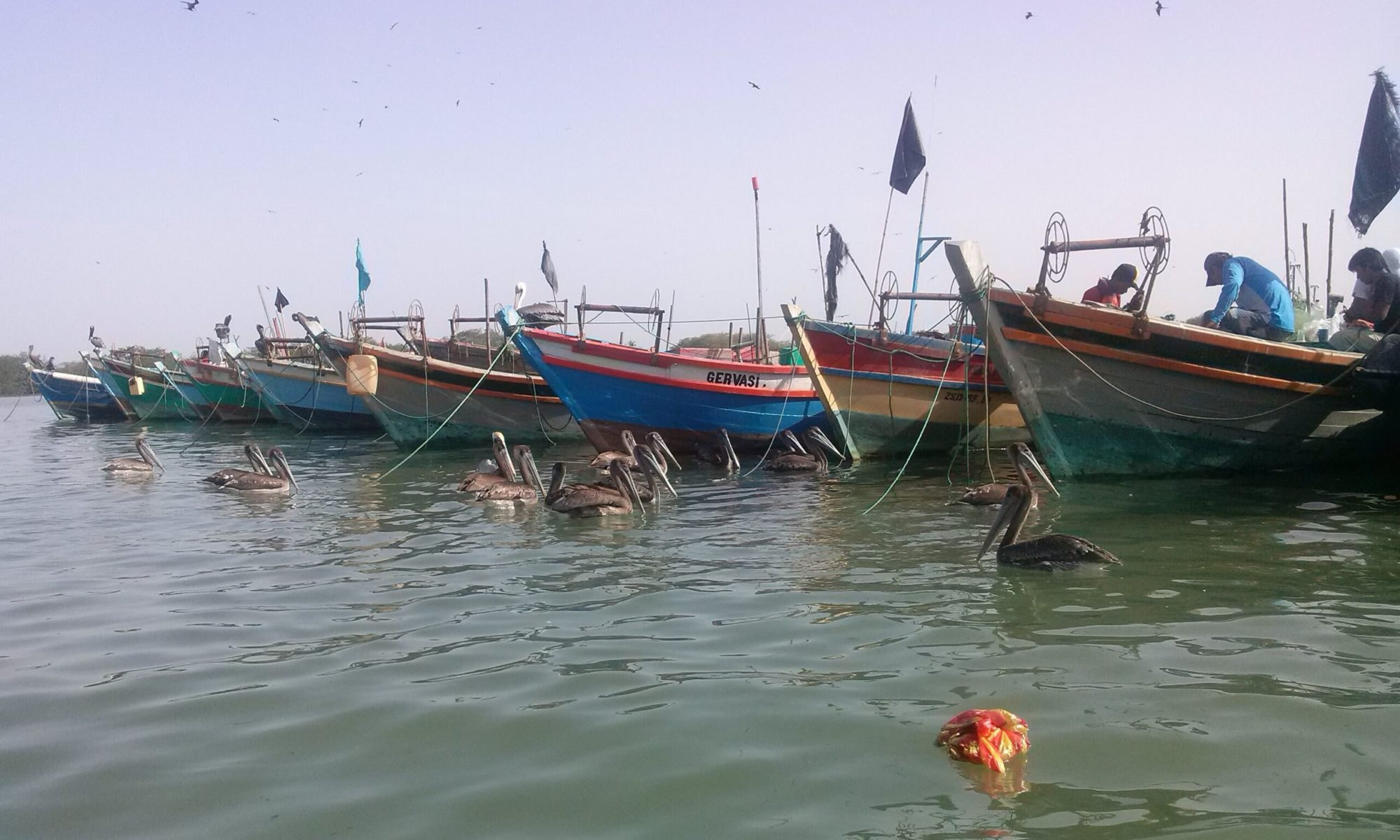 K In Motion Travel Blog. Tumbes Mangrove Tour. Line of Boats.