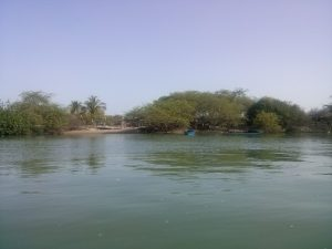 K In Motion Travel Blog. Tumbes Mangrove Tour. Swampy Island