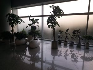 K in Motion Travel Blog. Journey to Kazakhstan via China. Yantai Airport Pot Plants