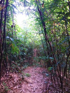 K in Motion Travel Blog. Myths About Hong Kong. Bamboo Forest
