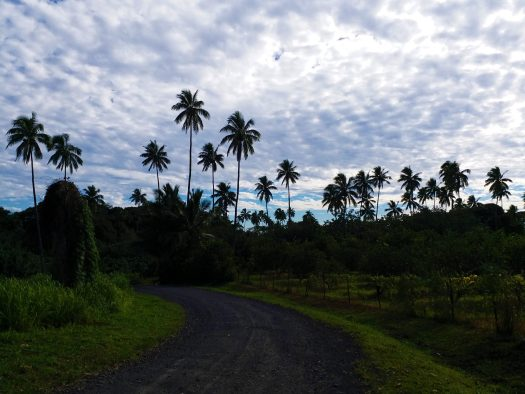 K in Motion Travel Blog. The Captivating Cook Islands. Palm Trees On The Walk Back to Town