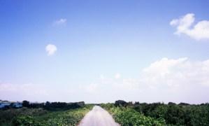 背割り堤の道