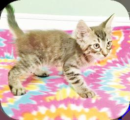 Adopt Me! – Mikey