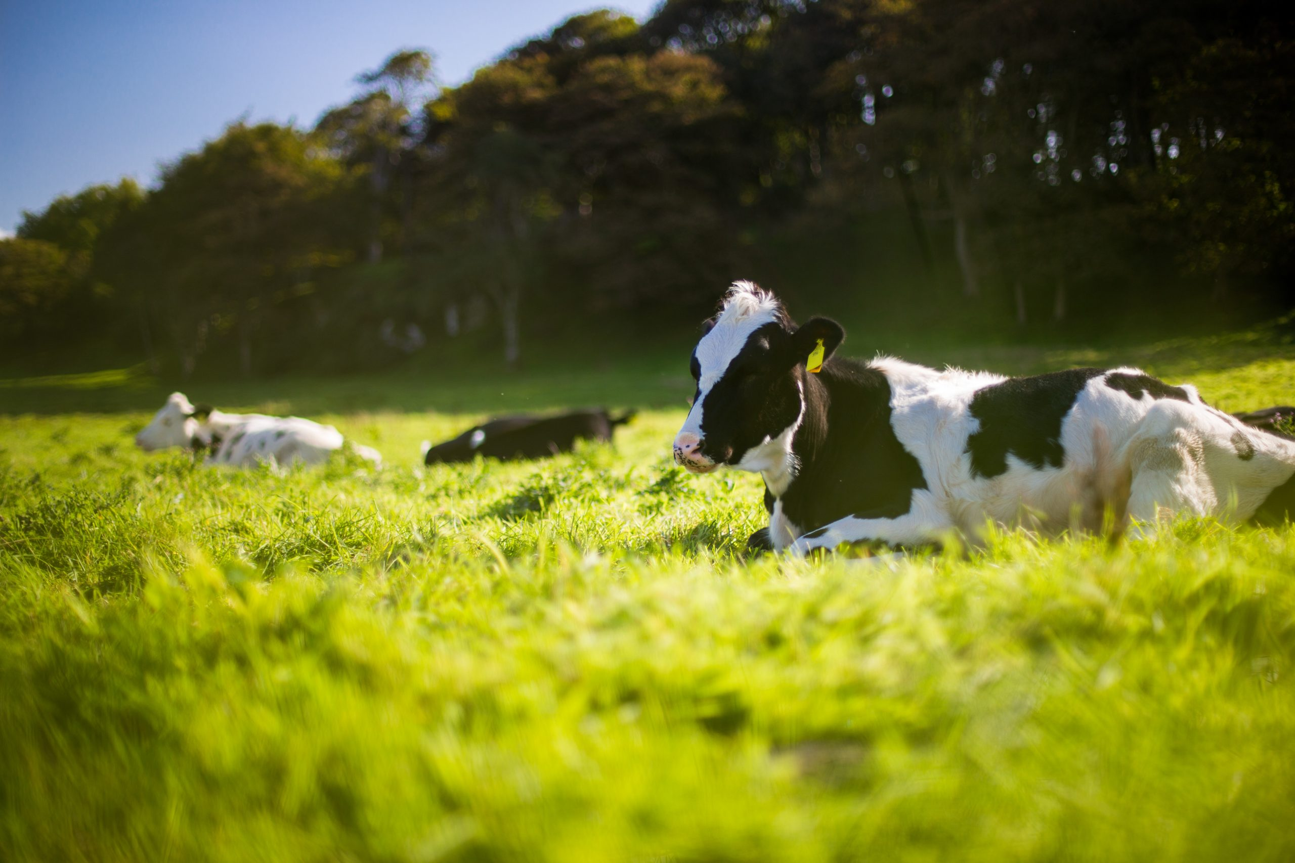 Peabody praised for transforming Wilkie Creek site into grazing land