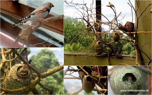 Vogelhaus botanischer Garten Ischia