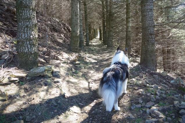 On y va dans cette forêt de pins ?