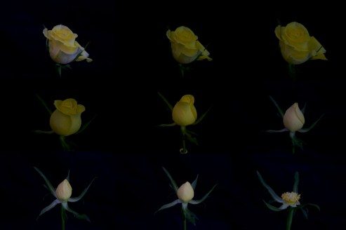flowers-b