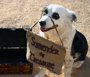 surrender_the_treasure_dog