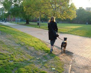 Train a dog to walk on a leash