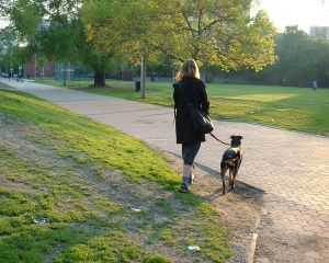 Train a dog to walk on a leash