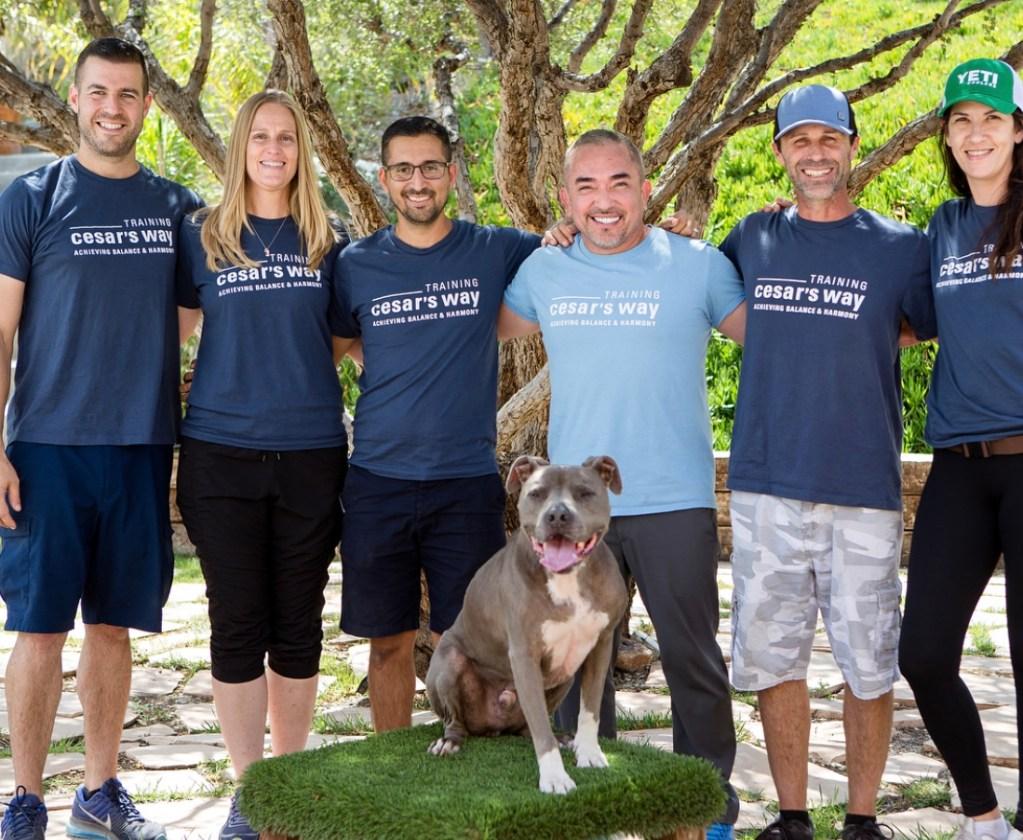 Online Dog Walking Course - The Walking Guide Training Class