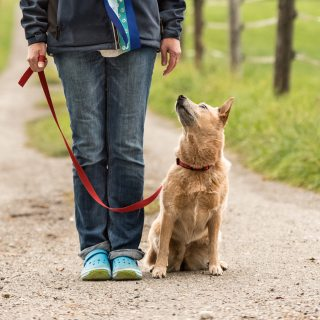 Training Dog to Walk on Leash Dog Trainer Near Me