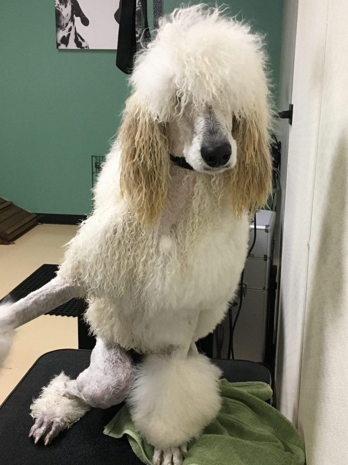 Long Hair Self Serve Dog Wash