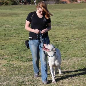 Dog Training Tuscon AZ