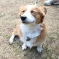 Dog Training Evaluations Tucson, AZ