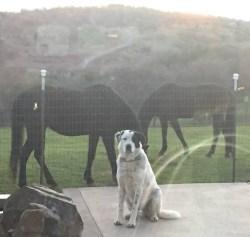 Tuscson Az Dog Training