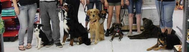 K9 Continued Education Dog Training for Tucson, AZ