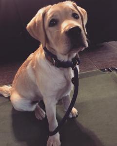 Puppy-board-train-DFW