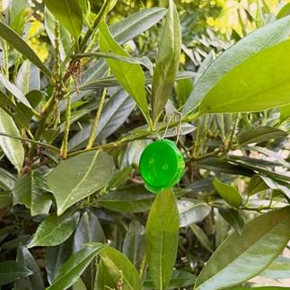 Mini Lacon Hang Hide GREEN Bush