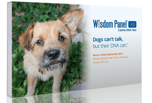 wisdom panel 4.0
