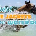 best dog life jacket reviews