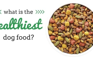 what is the healthiest dog food?