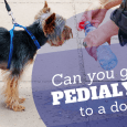 can you give pedialyte to a dog
