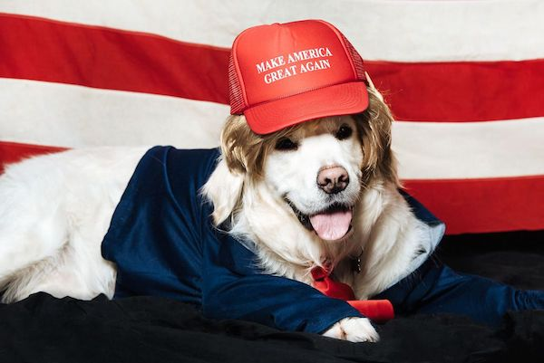 dogs dressed as donald trump