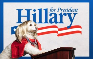 dog dressed as hillary clinton