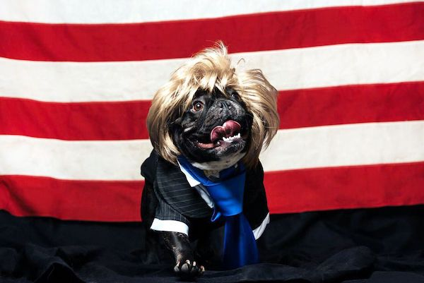 dogs dressed as trump