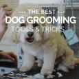 best dog grooming tools