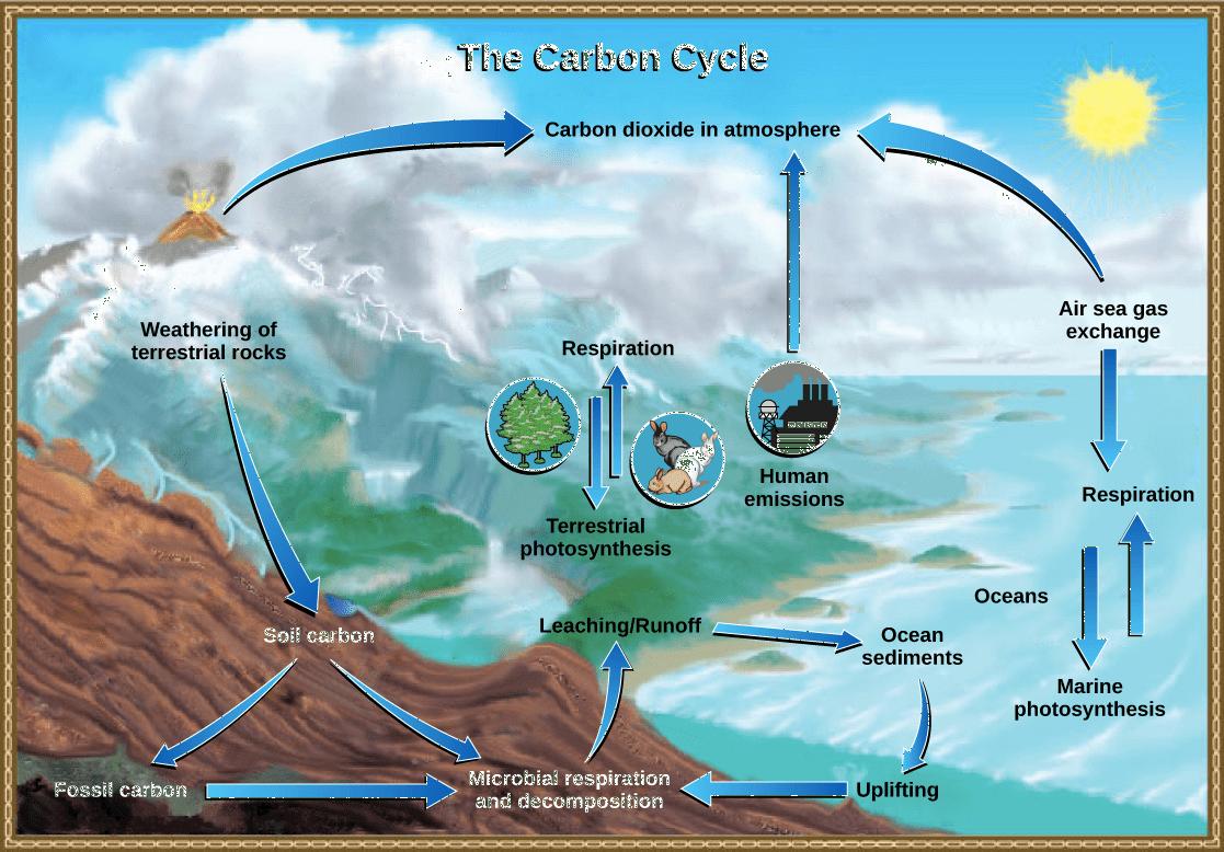 Simple Phosphorus Cycle Diagram
