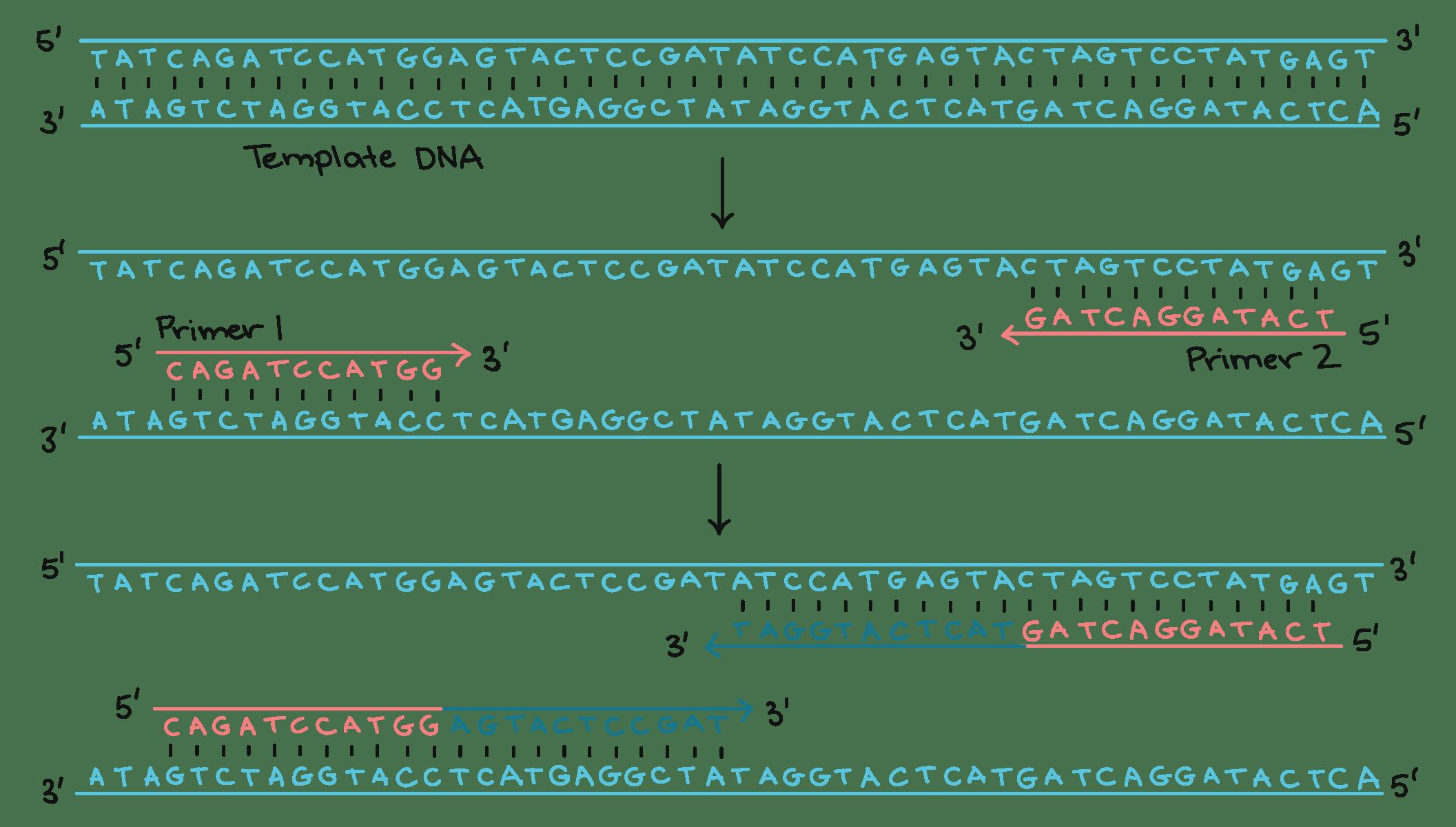 Biotechnology Dna Fingerprinting Essay