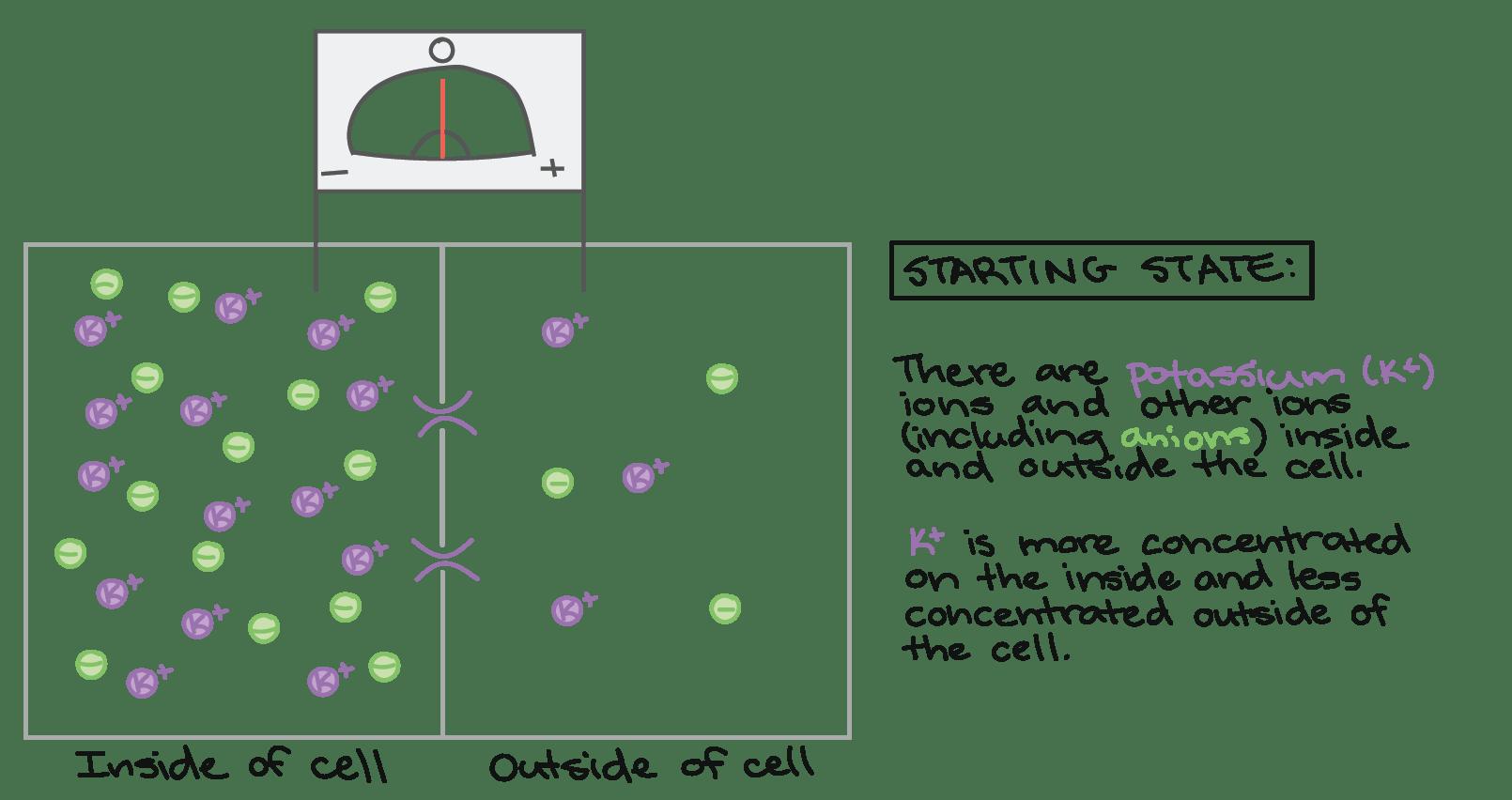 Fascinating Basic Reflex Arc Worksheet