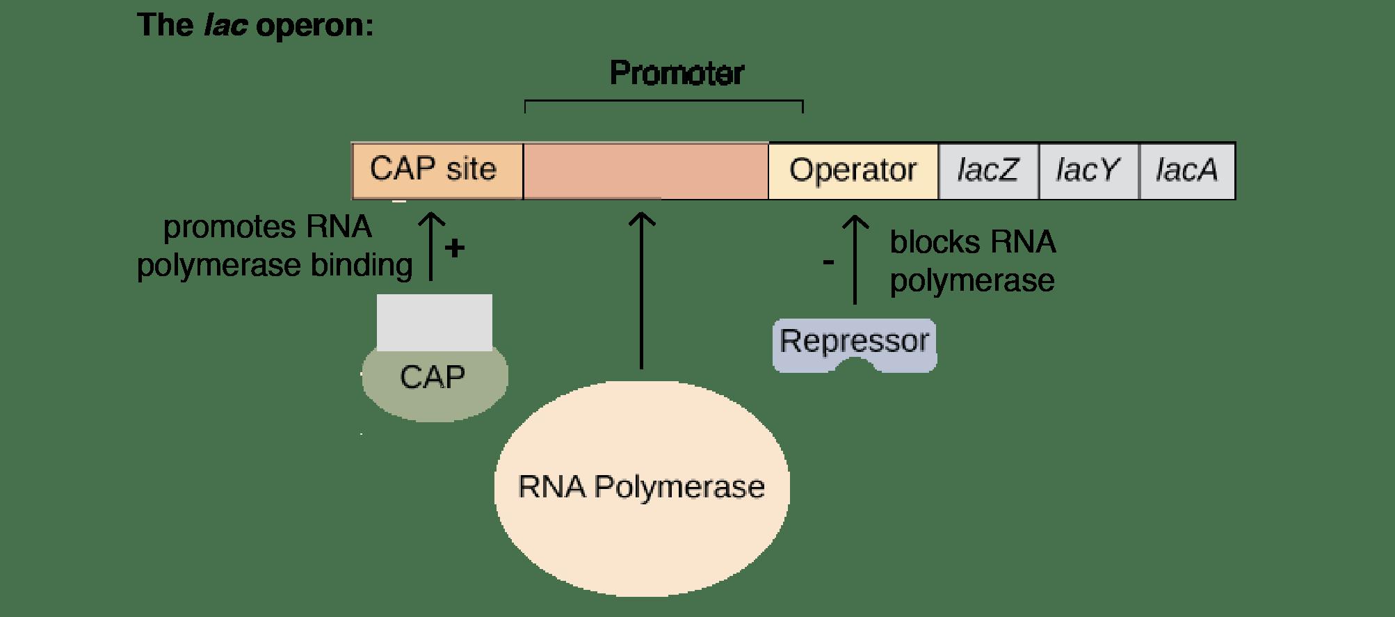 Bioinformatizando