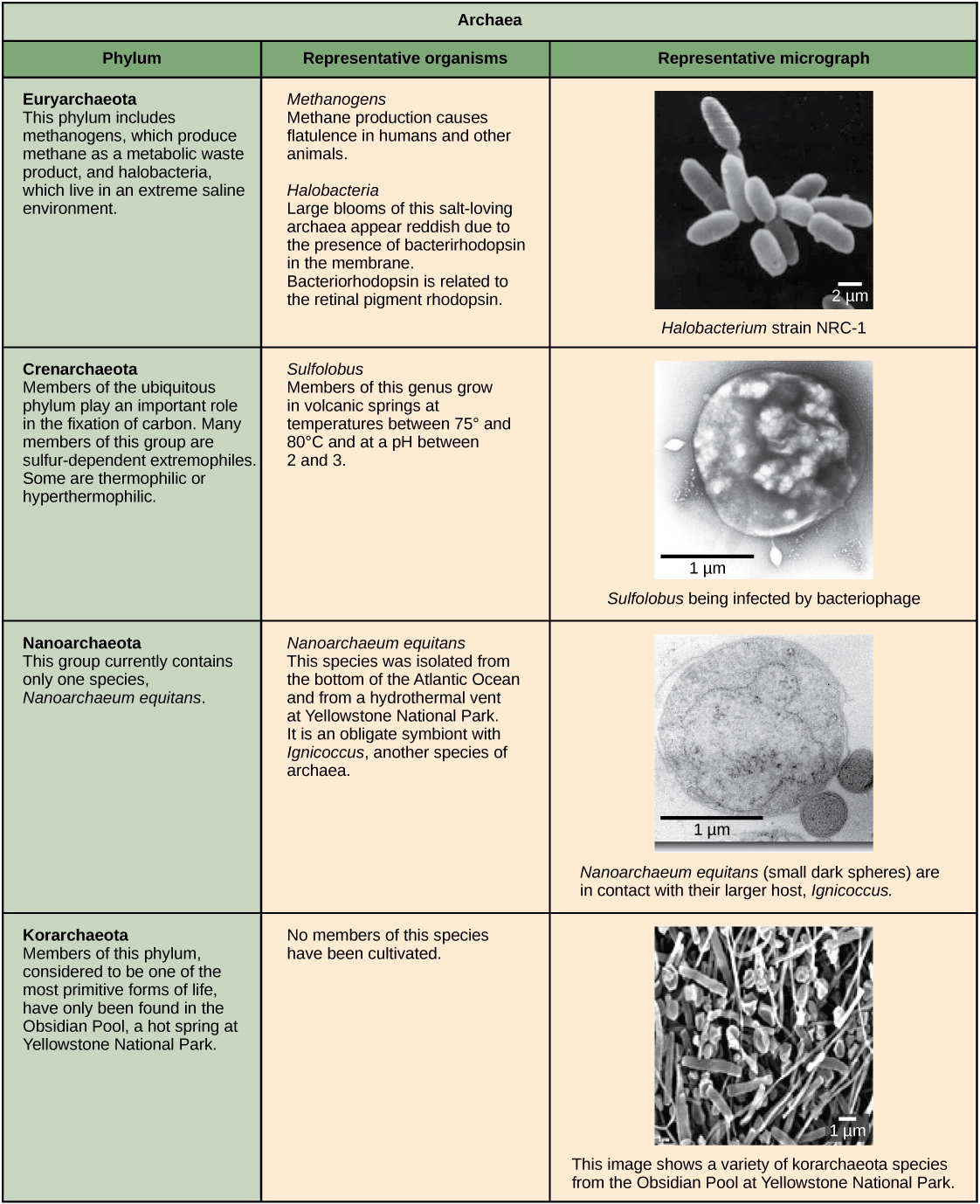 Archaebacteria Source Of Nutrition Besto Blog