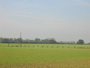 Slagmarken ved Agincourt er smykket med en række bemalede træplader i form af engelske bueskytter - et tiltag, som ser bedre ud, jo længere man befinder sig fra det (!)