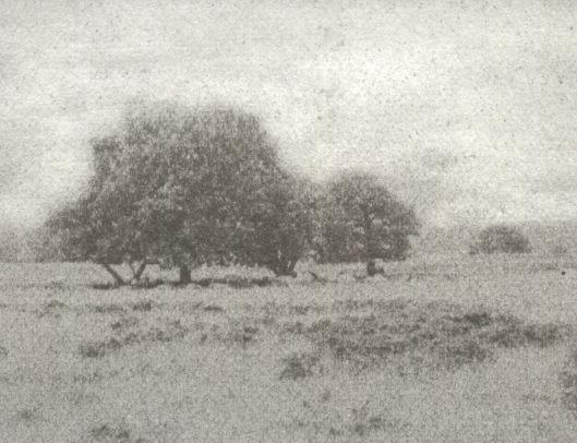 Landschappen 1 | Dwingelder veld