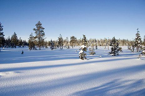 Halve Sverige på tvers langs polarsirkelen
