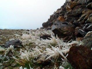 Frost på bakken