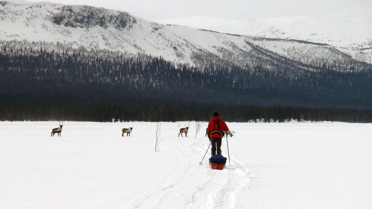 Fra Jokkmokk til Sulitjelma (Sverige på tvers, del 2)