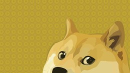 will dogecoin take off