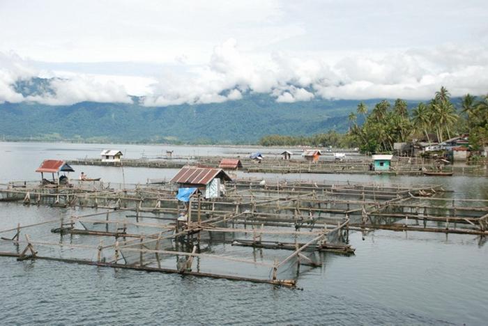 Keramba jala apung di Danau Maninjau. FOTO/KOMAPOST