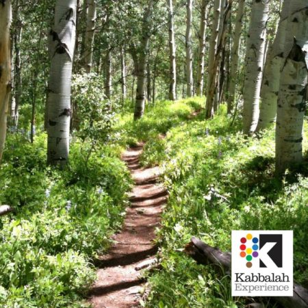 Course image - path in woods